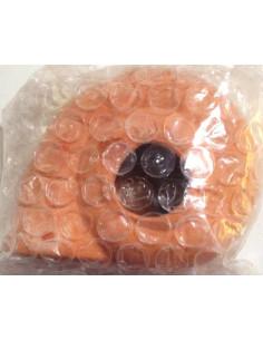 Concha caracol de mar