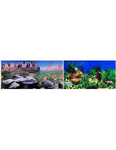 Poster desierto + plantas 2 caras 40cm