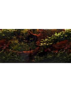 Poster oscuro con plantas y tronco