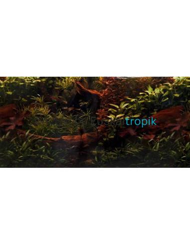 Poster planta + tronco 1 cara 50cm