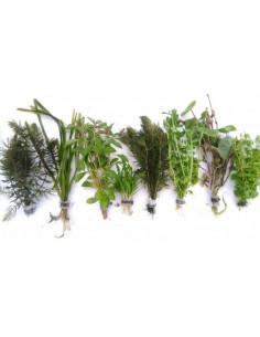 Surtido plantas medianas