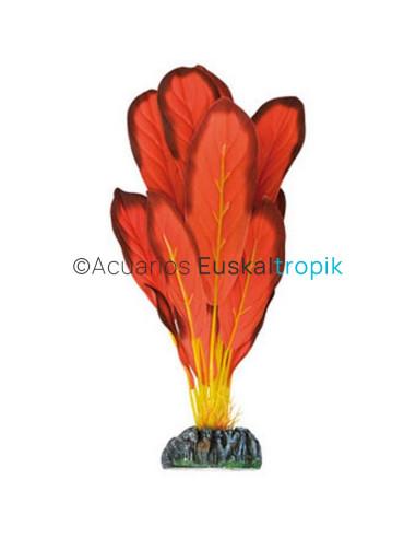 Echinodorus rojo