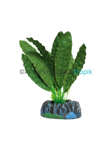 Aponogeton verde
