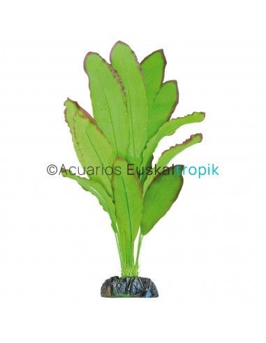 Echinodorus Spidemet