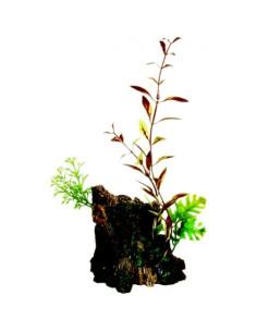 Ornamento deco wood con plantas marina