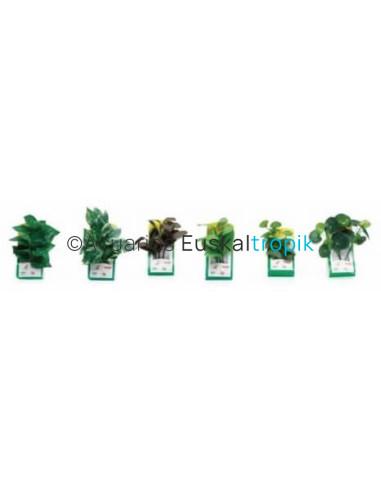 Plantas de tela surtido