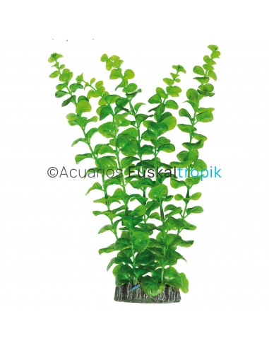 Bacopa australis 28cm (plástico)