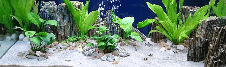 El ciclado en acuarios
