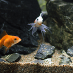 Iniciarse con un acuario y plantas
