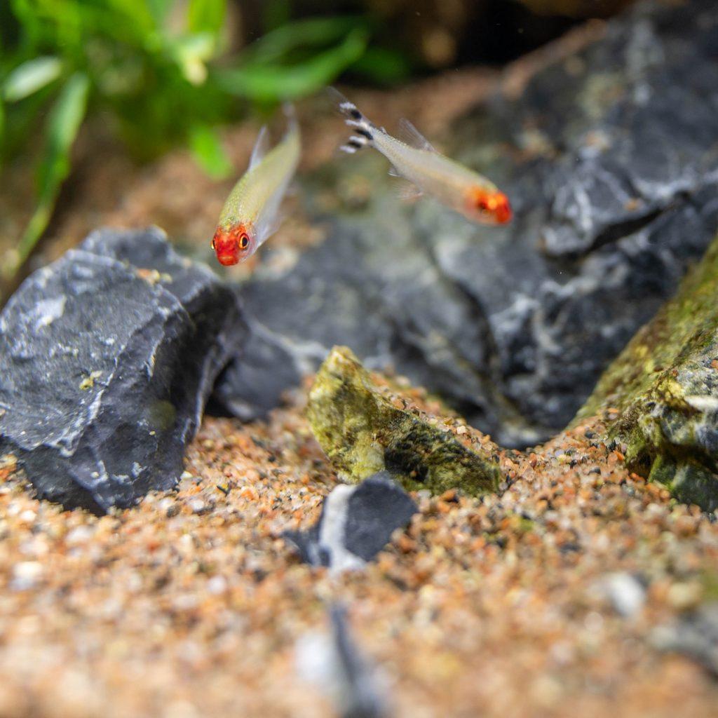 Aclimatación peces