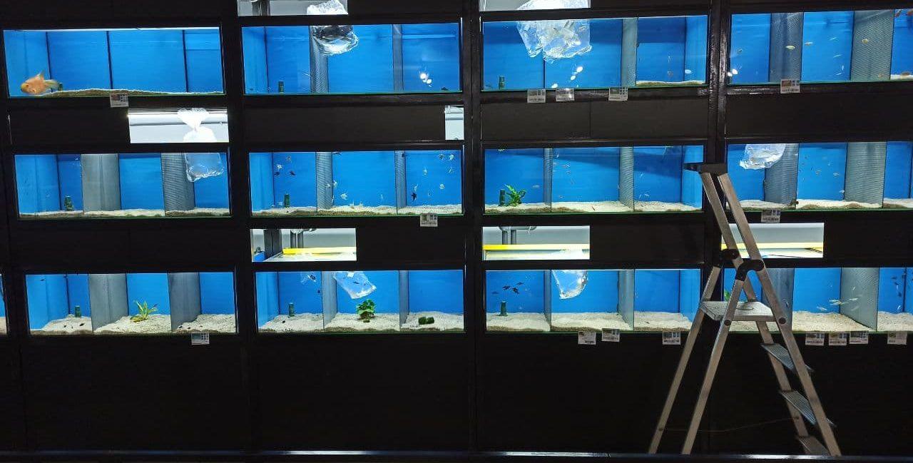Aclimatación de los peces en casa