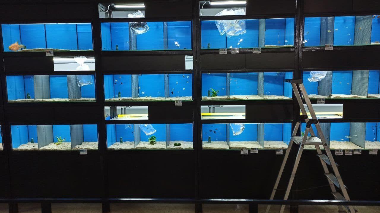 Aclimatación en tienda de peces