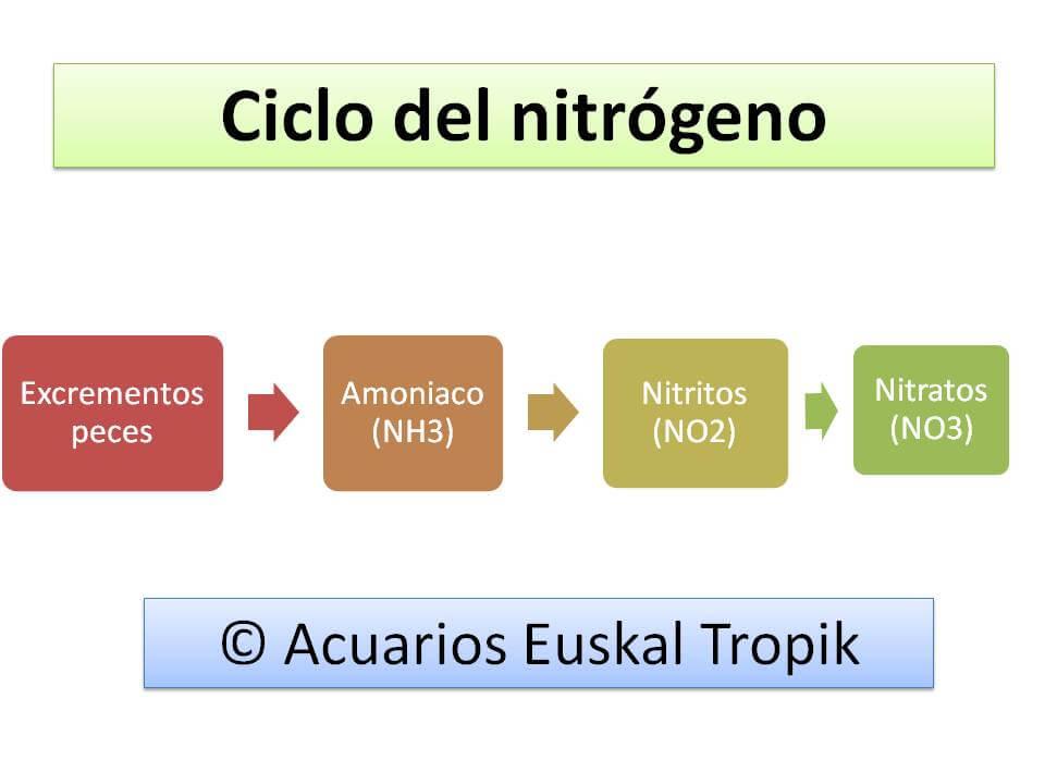 El ciclo biológico en los acuarios